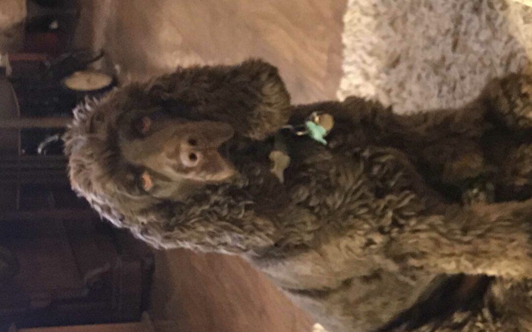 Meet Yoshi Bear: our new pets as therapy dog
